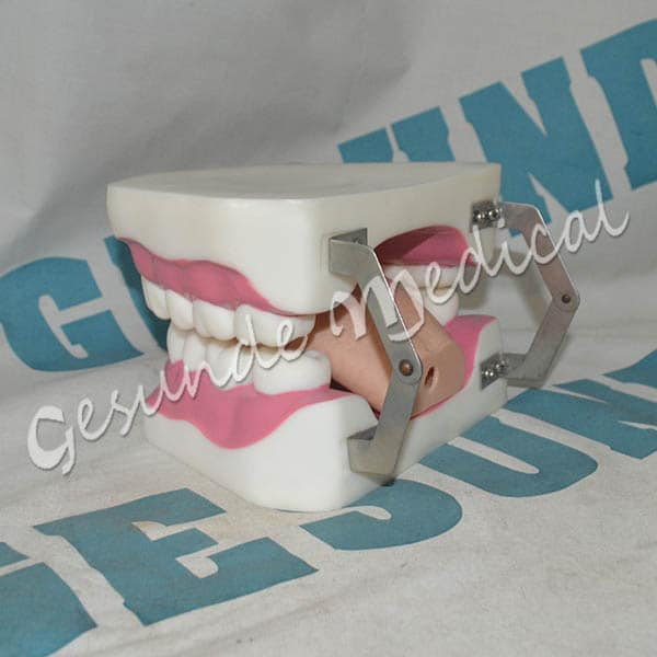 Torso Replika Gigi Kami Menjualnya 350db06121